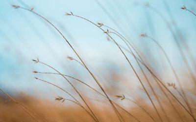 Éterické oleje proti úzkosti a stresu